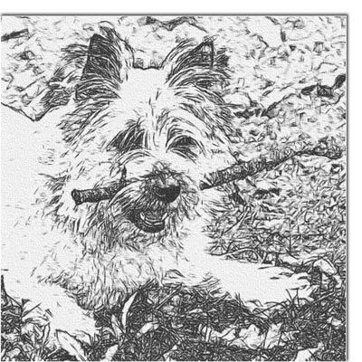 Photo de chien transformée en dessin au crayon gras